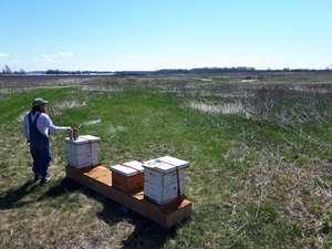 beekeeper with bee hives in field